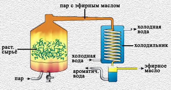 Метод перегонки с водяным паром| НатурВита